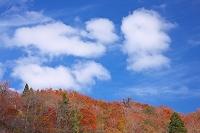 秋田県 由利本庄市 青空と雲