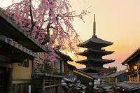 京都府 枝垂れ桜咲く夕刻の八坂道の家並みと八坂の塔