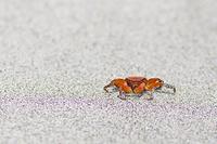 静岡県 南伊豆 弓ヶ浜 蟹