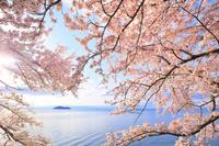 日本 滋賀県 海津大崎の桜と琵琶湖と竹生島