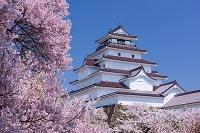 福島県 桜と会津若松城