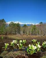 長野県・松本市 ミズバシヨウ咲くどじょう池と乗鞍岳