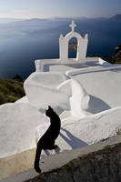 ギリシャ 白い建物とエーゲ海と黒猫
