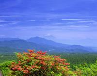 山梨県 美し森から望む初夏のつつじと富士山