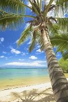 ハワイ 椰子の木とビーチ