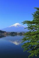 山梨県 河口湖 産屋ヶ崎から見る朝の残雪富士と逆さ富士