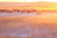 北海道 日の出と霧氷のヤチハンノ木