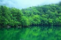 栃木県 奥日光 湯ノ湖と緑