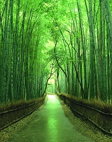京都・嵯峨野 竹林