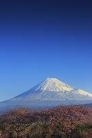 静岡県 沼川沿いの河津桜と早春の富士山