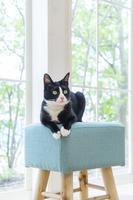 椅子に伏せて見つめる猫