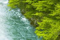新潟県 胎内市 胎内川