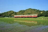 千葉県 小湊鉄道 キハ211