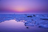 北海道 朝の流氷