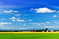 北海道 空知平野の夏景色