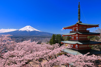 山梨県 新倉山浅間公園の桜と忠霊塔と富士山