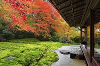 京都府 瑠璃光院 書院一階から見る瑠璃の庭の紅葉