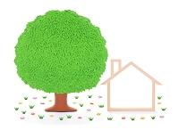 木の家のフレームと大樹