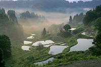 朝靄の蒲生の棚田 新潟県