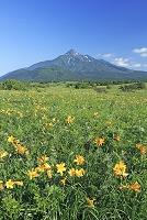 北海道 エゾカンゾウと利尻富士