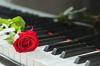 ピアノとバラ