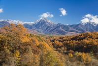 長野県 カラマツの黄葉と八ヶ岳連峰