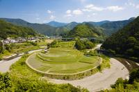 和歌山県 田植えの終った「あらぎ島の棚田」