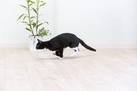 フローリングを走る猫