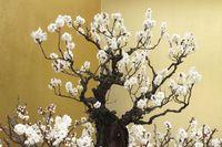 花 盆栽 梅