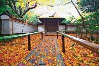 京都 大徳寺 高桐院
