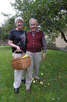 スウェーデン ヴェステロース  庭木の定番リンゴを収獲する老...
