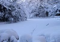 雪に覆われた公園