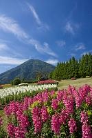 宮崎県 生駒高原の花畑と夷守岳