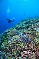 サンゴ礁とダイバー