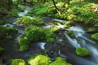 栃木県 尚仁沢湧水