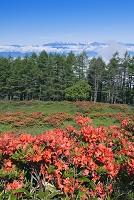 長野県 美ヶ原より北アルプス