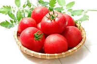 かご盛りのトマト