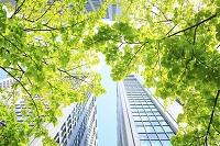 東京都 若葉と高層ビル