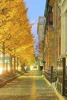 東京都 イチョウ並木と三菱一号館美術館