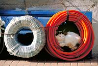 モロッコ ホースの輪の空間でくつろぐ猫