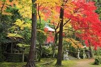 京都府 護法堂弁財天の紅葉