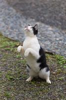 猫村の立ち上がる猫