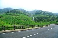 北海道 三国峠の新緑