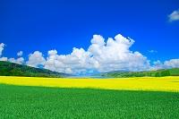 ドイツ 草原