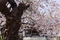 北海道 松前町 光善寺