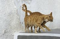 ギリシャ 寄り添う猫のカップル