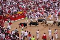 スペイン パンプローナ エンシエロ(牛追い祭り)