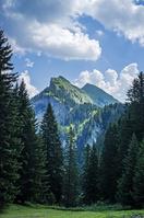 アルプスと森