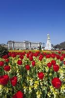 イングランド ロンドン バッキンガム宮殿