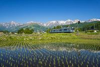 長野県 大糸線と白馬三山
